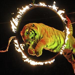 Цирки Майны