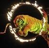 Цирки в Майне